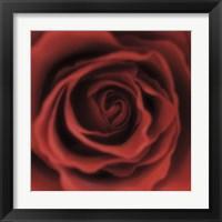 Framed Red Rose Square