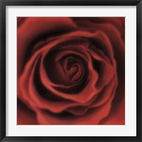 Framed Red Rose Square