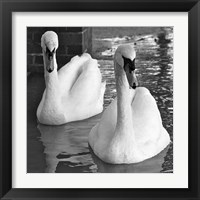Framed Swans In Love BW