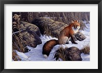 Framed Mid Winter Pause - Red Fox