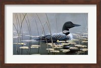 Framed Loon In Reeds