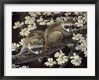 Framed Dogwood Hideout - Young Raccoons
