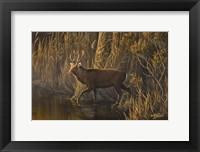 Framed Evening Rounds Sika Deer
