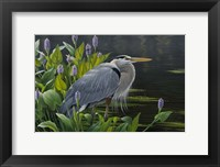 Framed Biding Time Great Blue Heron