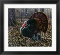 Framed King Of Spring - Wild Turkey