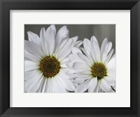 Don't Eat Daisies I Framed Print