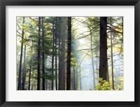 Framed Shrouded Forest II