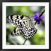 Framed BW Butterly Purple Flower Color