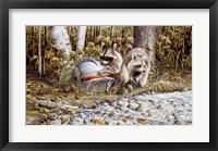 Framed Raccoons