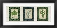 Framed Three Leaves C
