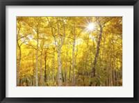 Framed Aspen Morning