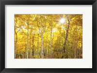 Framed Aspen Morning