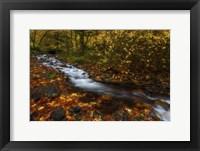 Framed Creekside Colors