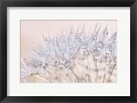 Framed Dandelion Dew II