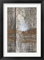 Framed Feather on Wood I