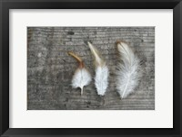 Framed Three Feathers on Wood