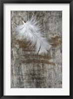 Framed White Feather on Wood