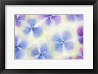Framed Blue and White Hydrangea Flowers