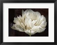 Framed Double White Tulip