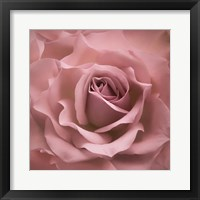 Framed Misty Rose Pink Rose