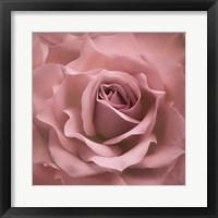 Framed Misty Rose Pink Rose