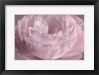Framed Persian Pink Petals