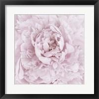Framed Pink Peony Flower
