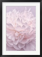 Framed Pink Peony Petals I