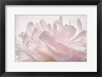 Framed Pink Peony Petals V