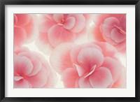 Framed Rose Begonia Flowers
