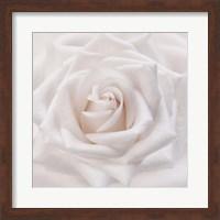 Framed Soft White Rose