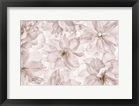 Framed Translucent Cherry Blossom