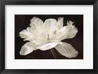 Framed White Tulip I
