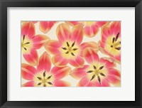 Framed Yellow and Coral Red Tulips