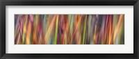 Framed Grass Spectrography