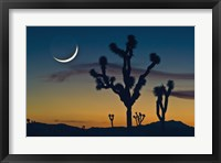 Framed Colored Sky with Moon and Cactus