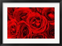 Framed Red Roses in Bloom