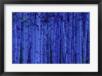 Framed Blue Birches