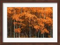 Framed Orange Trees
