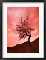 Framed Tree with Pink Sky