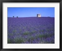 Framed Lavendar Fields