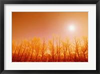 Framed Warm Trees