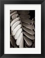 Tropical Plant I Framed Print