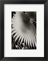 Palm Frond II Framed Print
