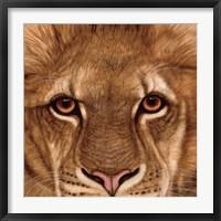 Framed Eyes of the Lion