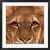 Framed Eyes of the Lion