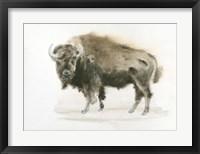 Framed Buffalo Bill