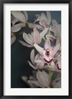 Framed Dark Orchid II