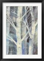 Winter Birches II Framed Print