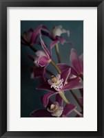 Framed Dark Orchid IV